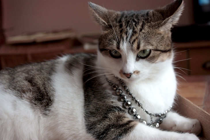 Zabezpieczony: Kotylia