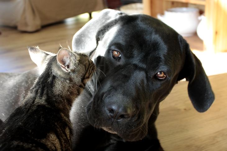 Kocio-psia miłość…