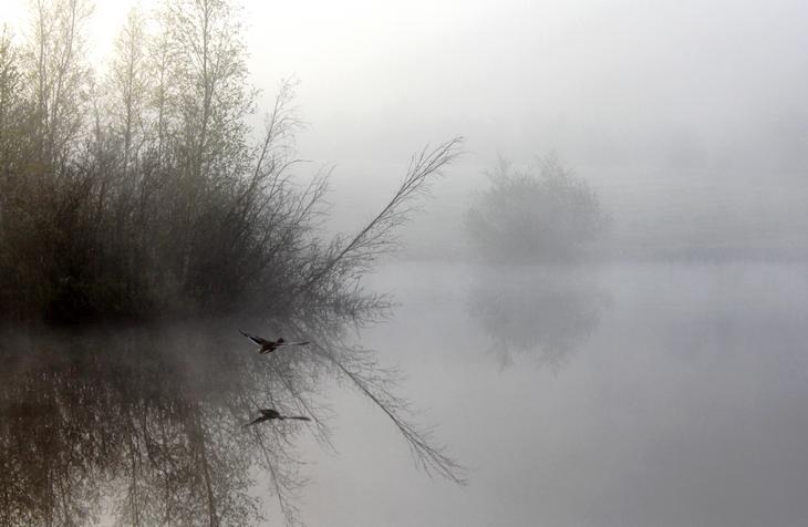 Jak przez mgłę