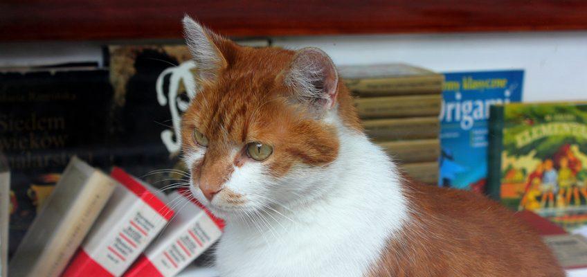 Mam kota na punkcie kotów, czyli wariat naukowy